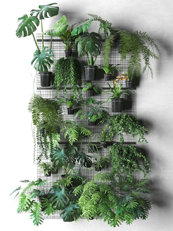- Plant WallAgain not a specific plant but more of an idea. A grid plant wall with all different leaf shapes would be amazing. Not only because it would be so cool but also an amazing photo background.