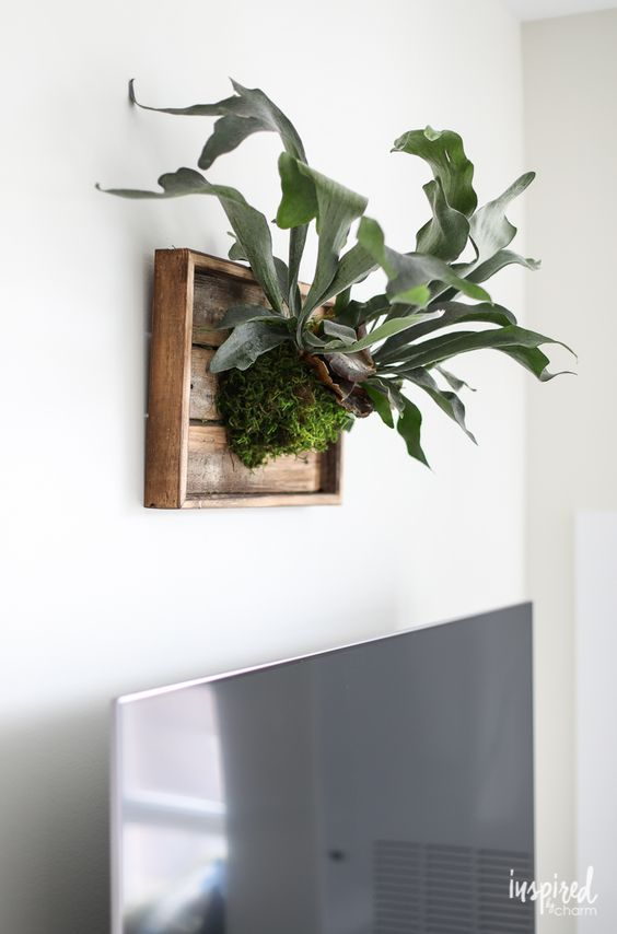 - Staghorn FernI love the idea of a plant I can mount and hang on my wall. The shape of these leaves make my heart swoon.