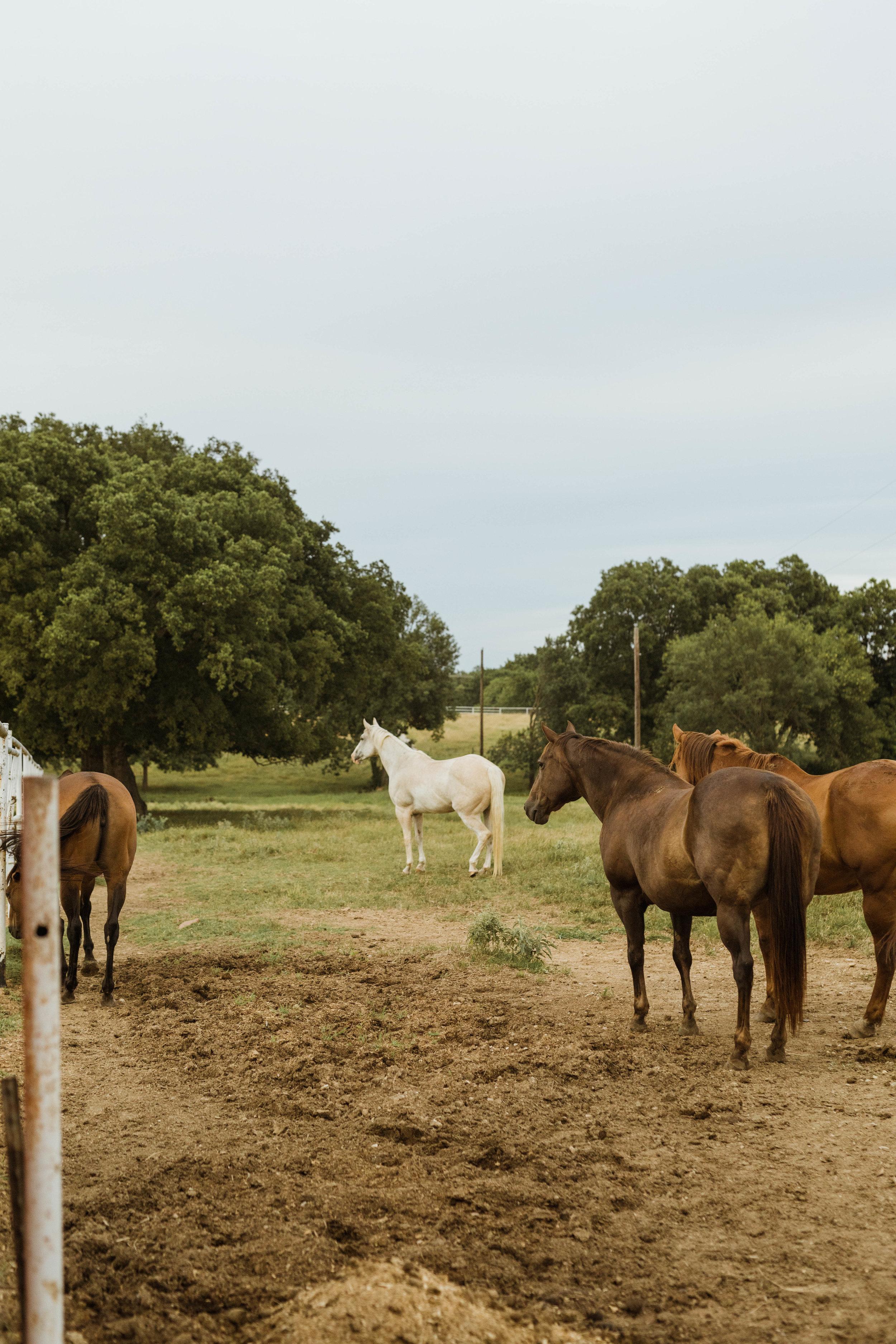 racheal-horses-31.jpg
