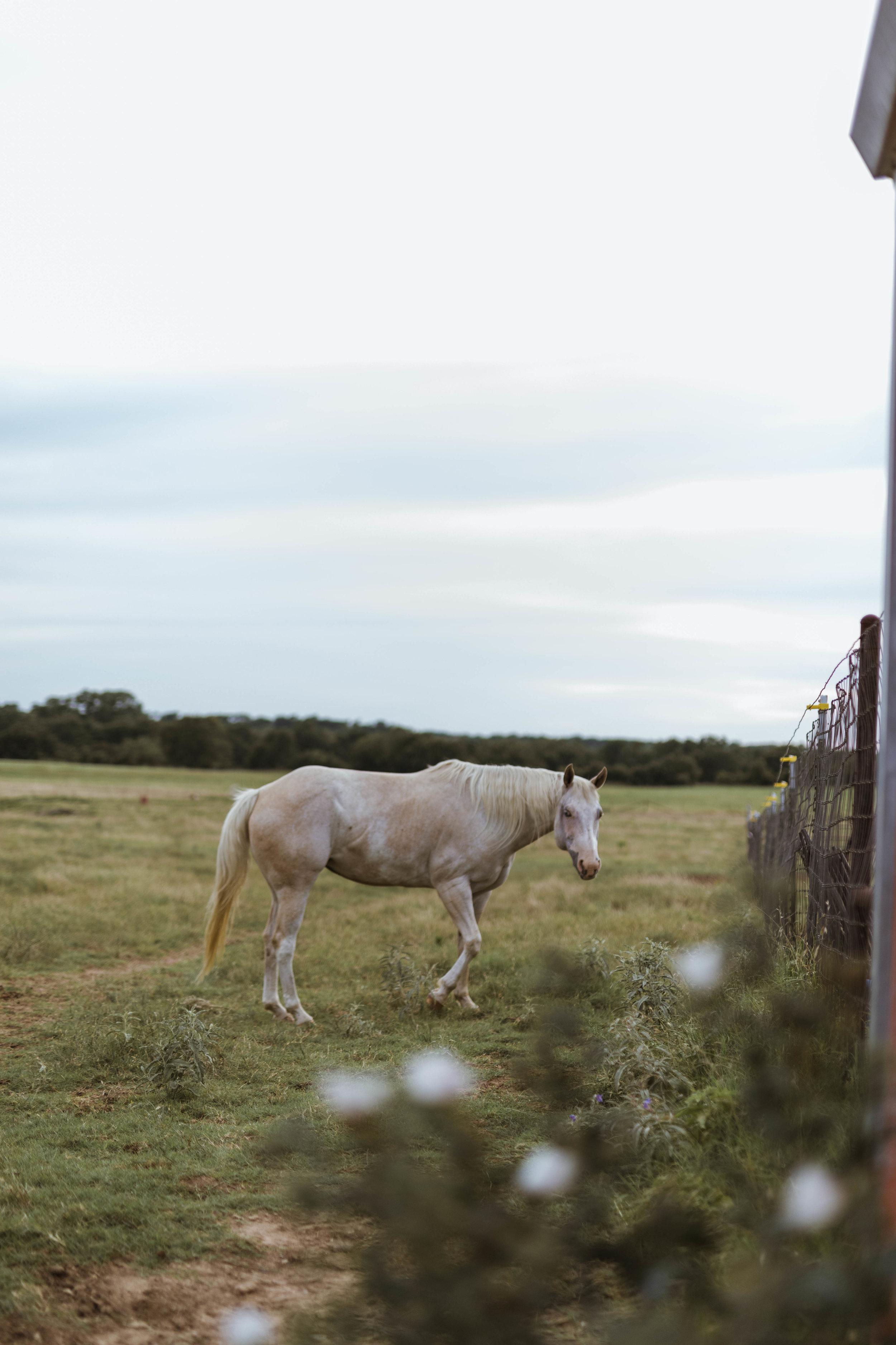 racheal-horses-17.jpg