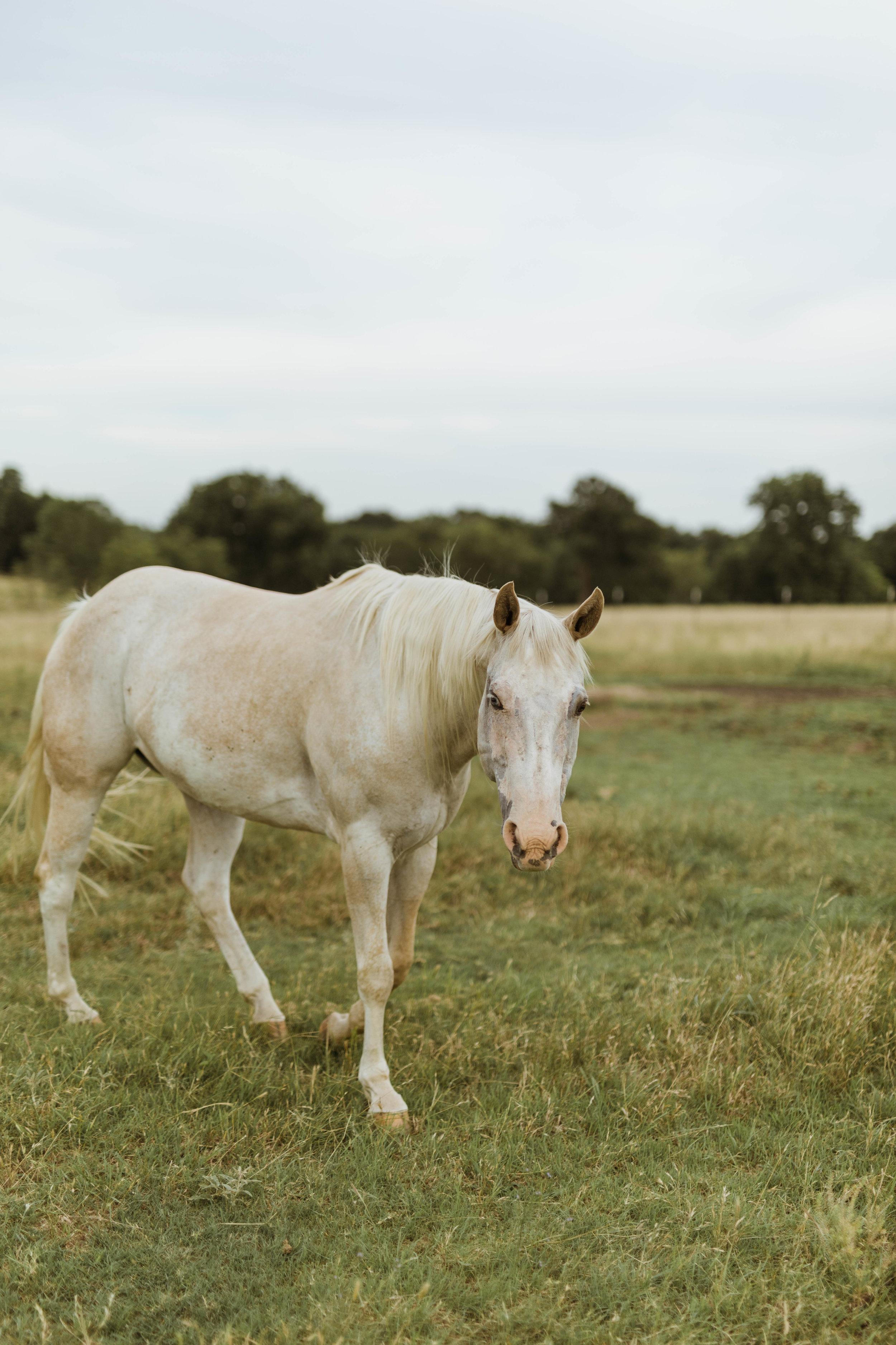 racheal-horses-8.jpg