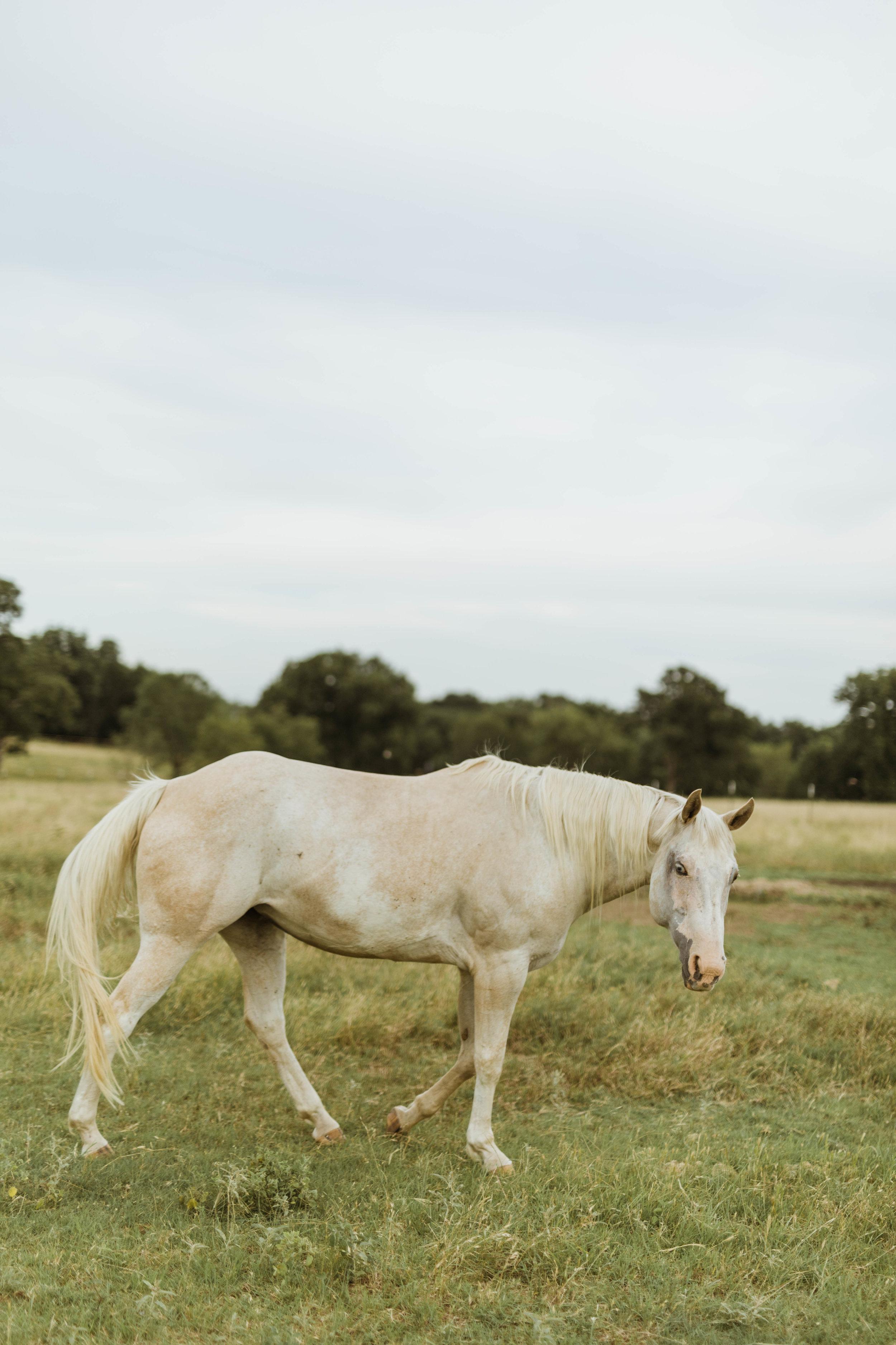 racheal-horses-7.jpg