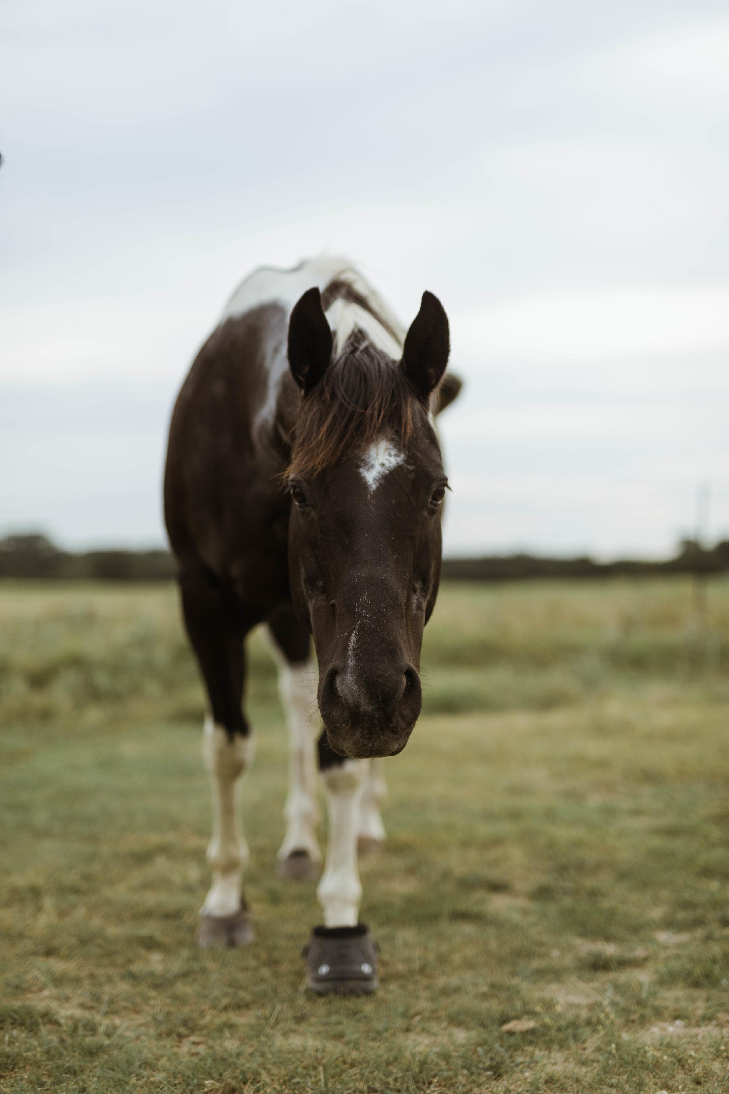 racheal-horses-5.jpg