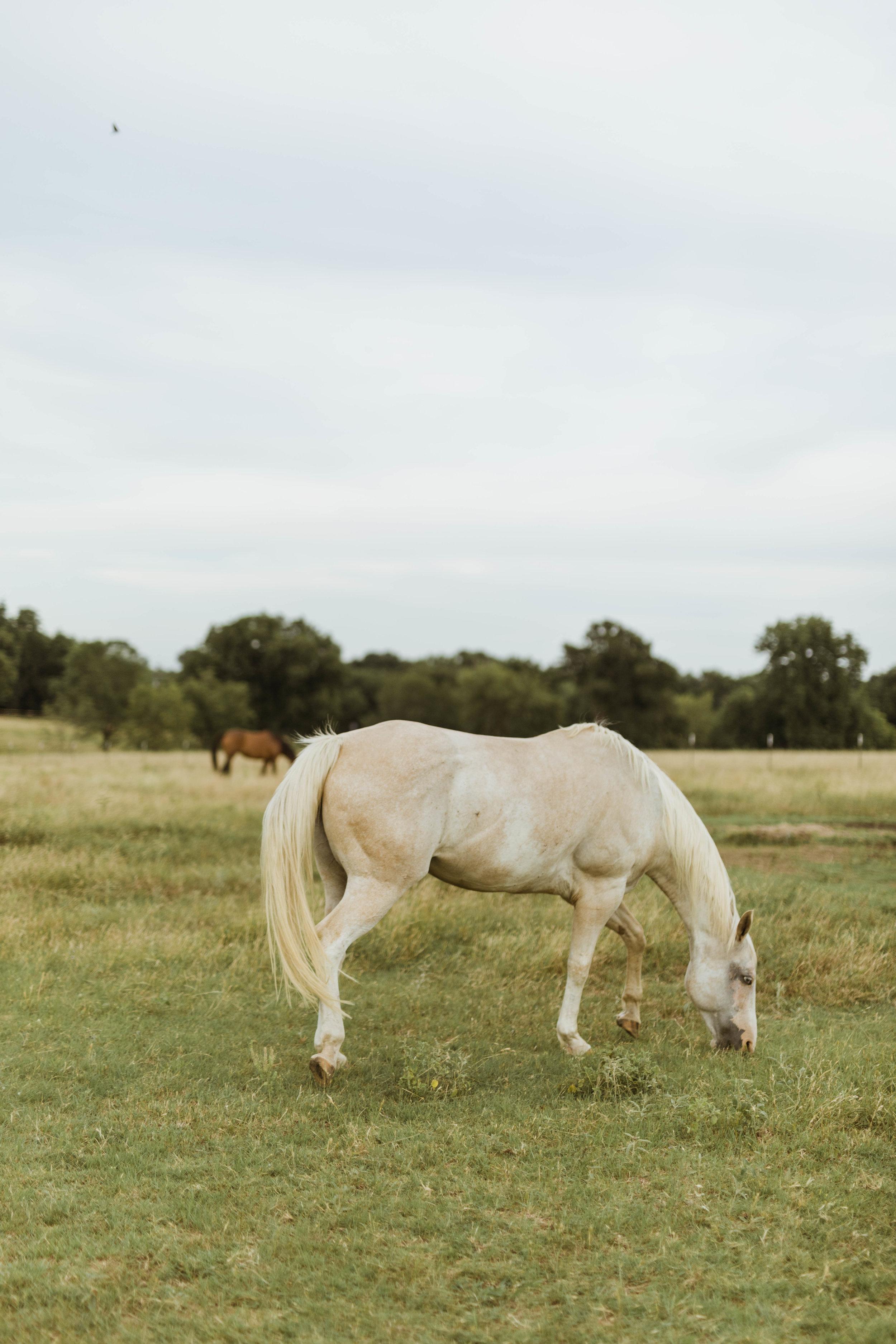 racheal-horses-6.jpg