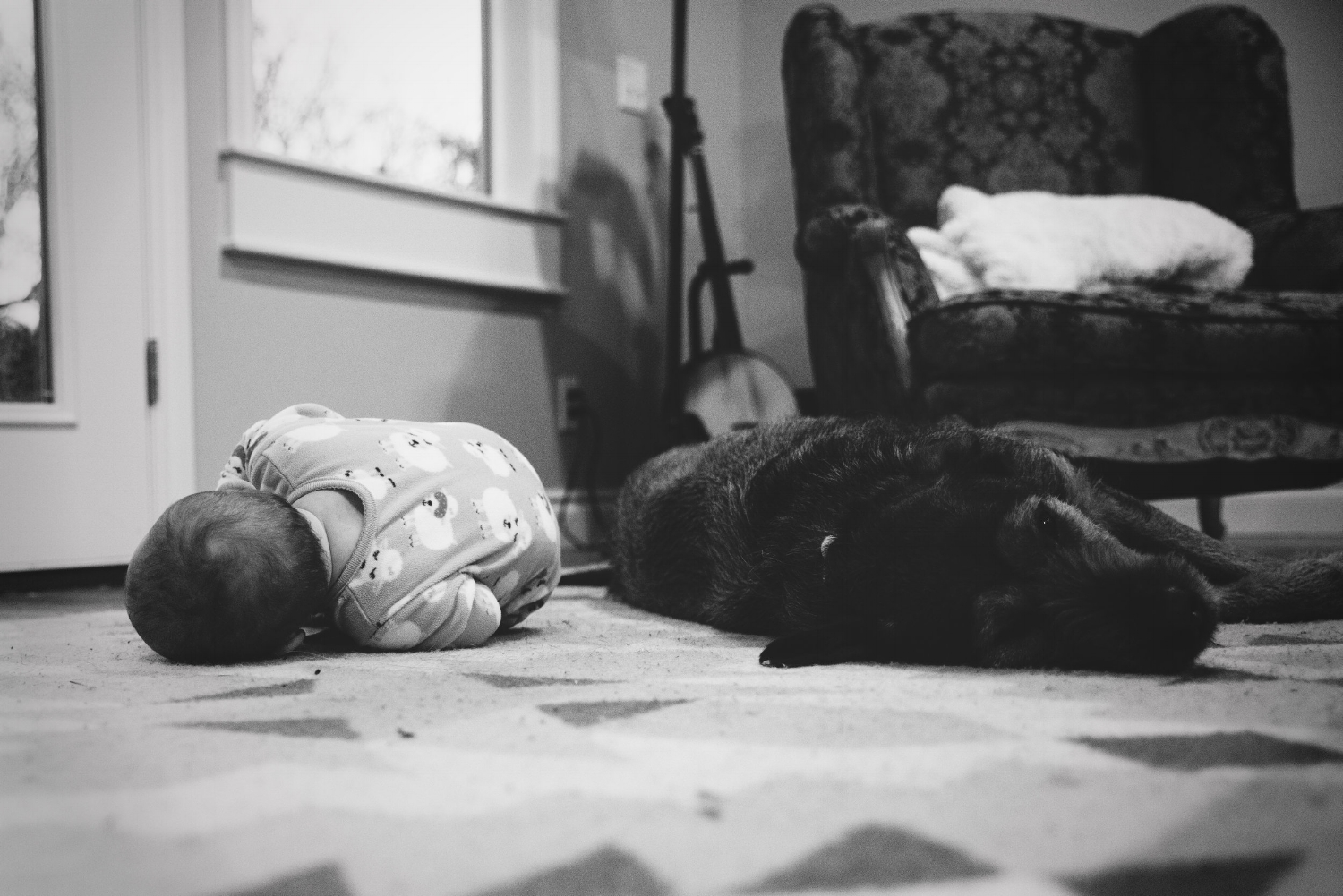 raising dogs and babies