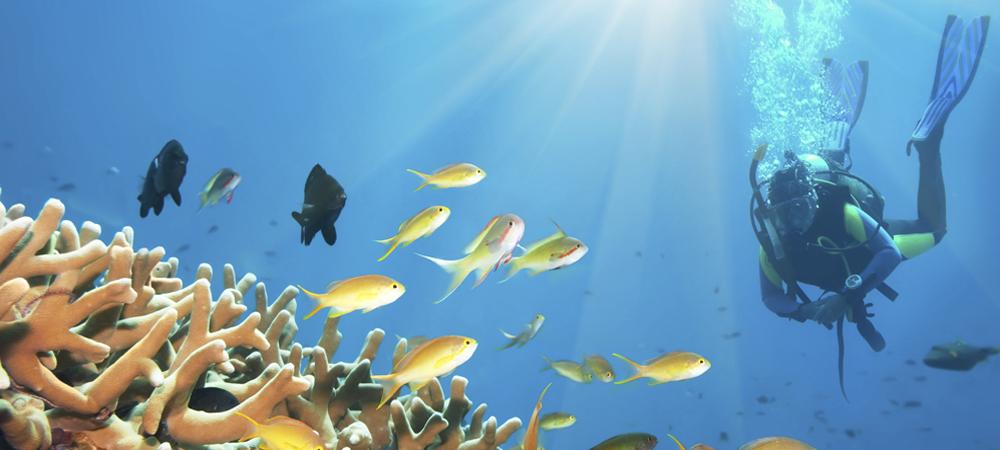 9 - Scuba Diving (1000x450).jpg