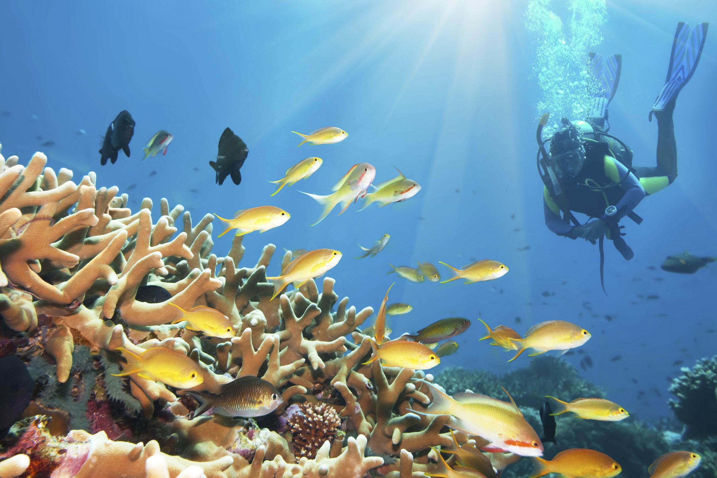 9 - Scuba Diving.jpg