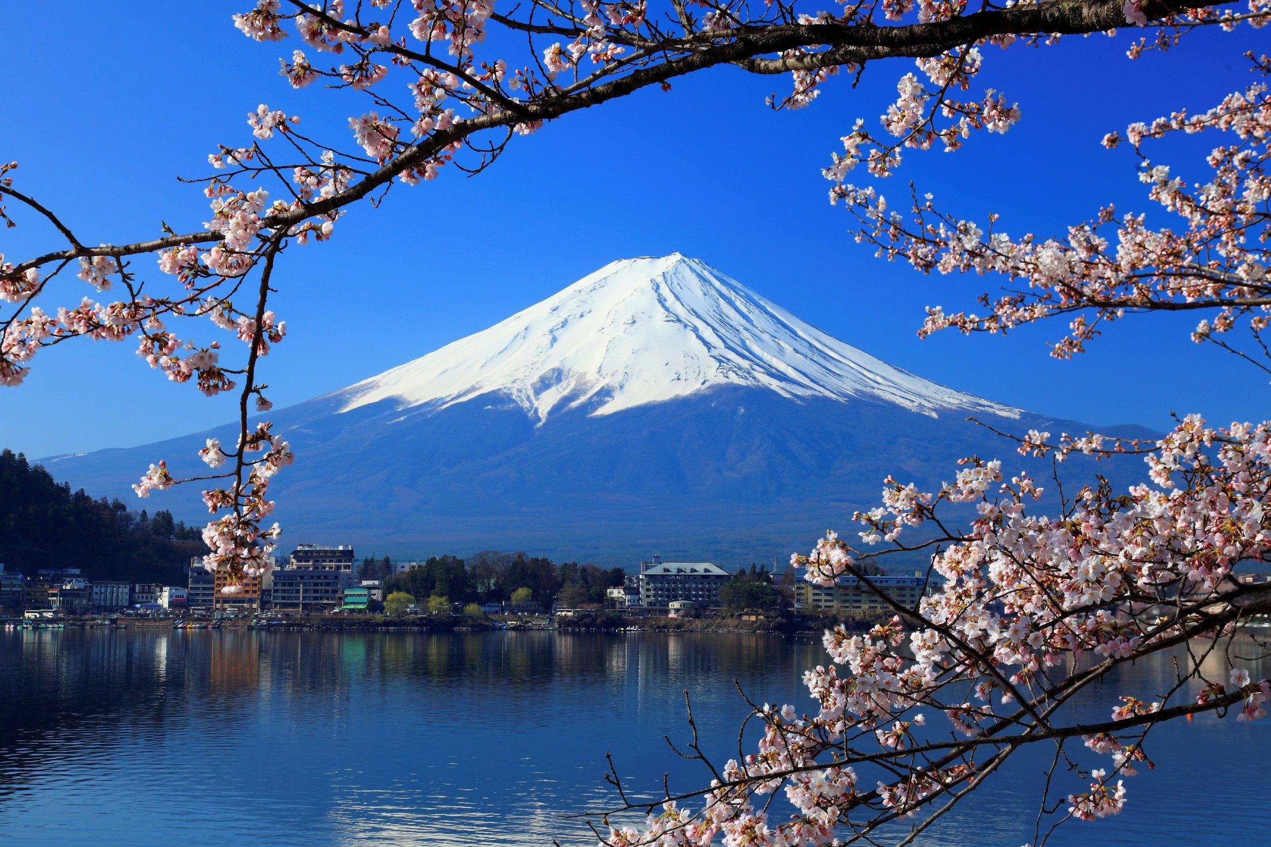 3 - Japan, Tokyo, Mount Fuji, Cherry Blossom (2).jpg