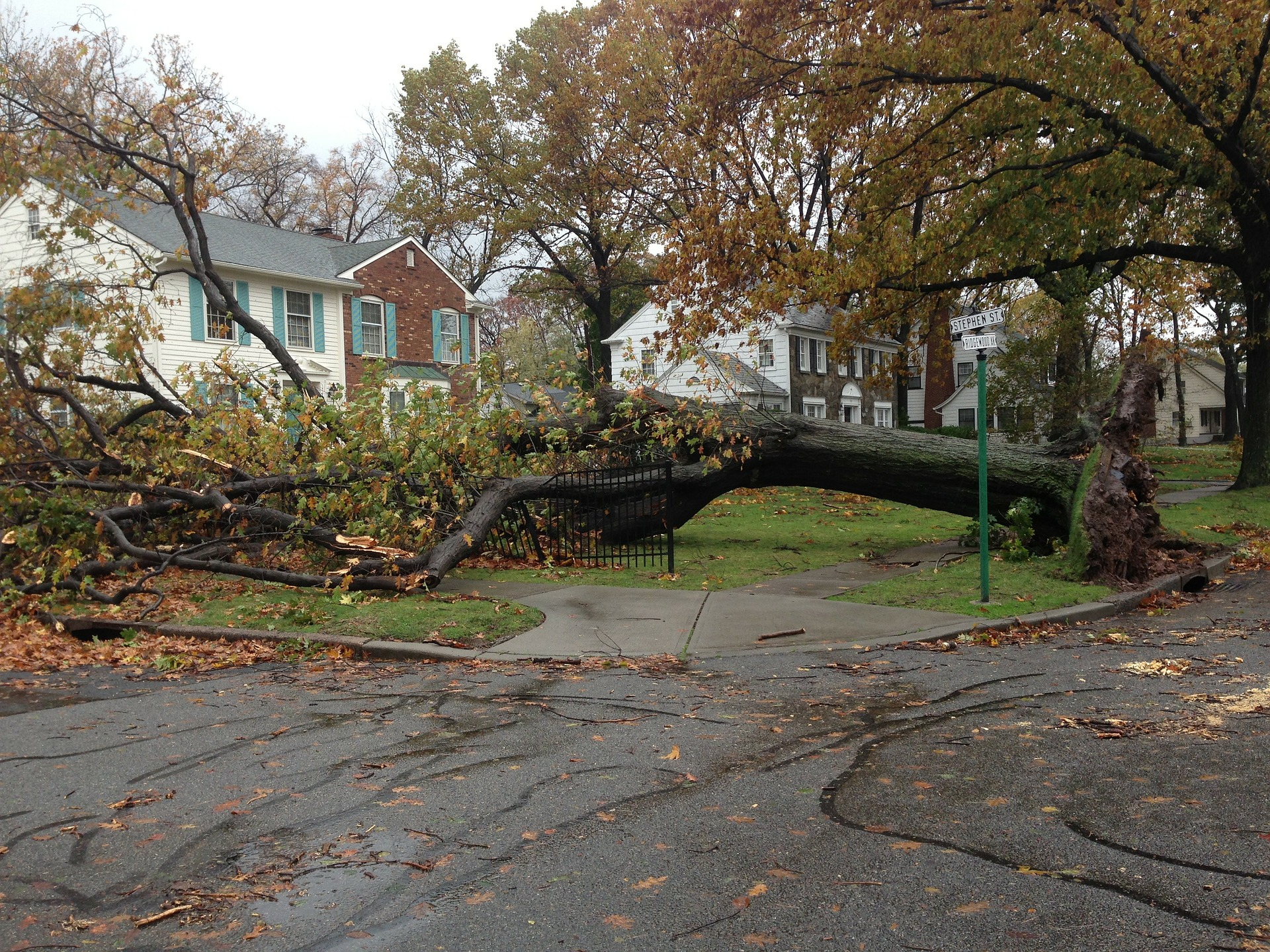 image of big tree fallen on house