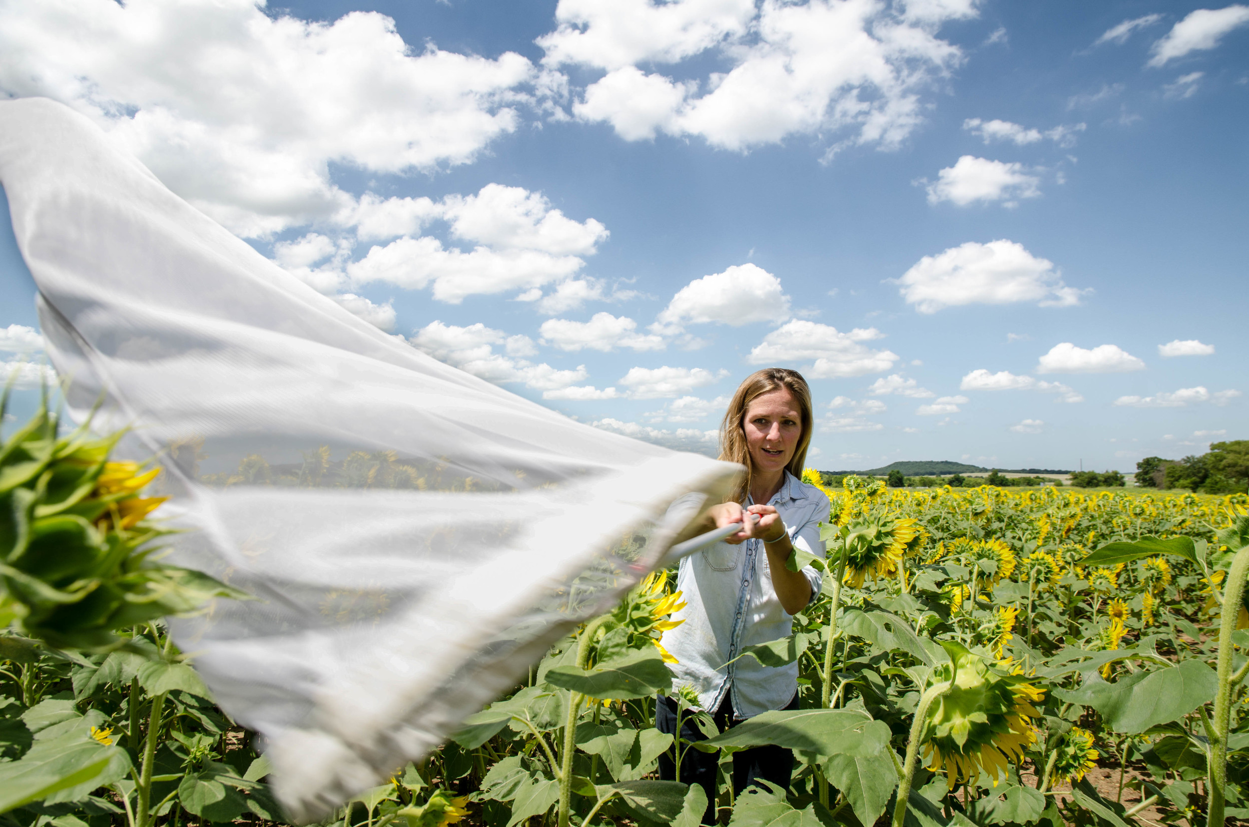 With a bee in her sights Jessica Beckham, an environmental science graduate student at UNT, hopes to continue her study of the bumblebee population by catching and analyzing them.