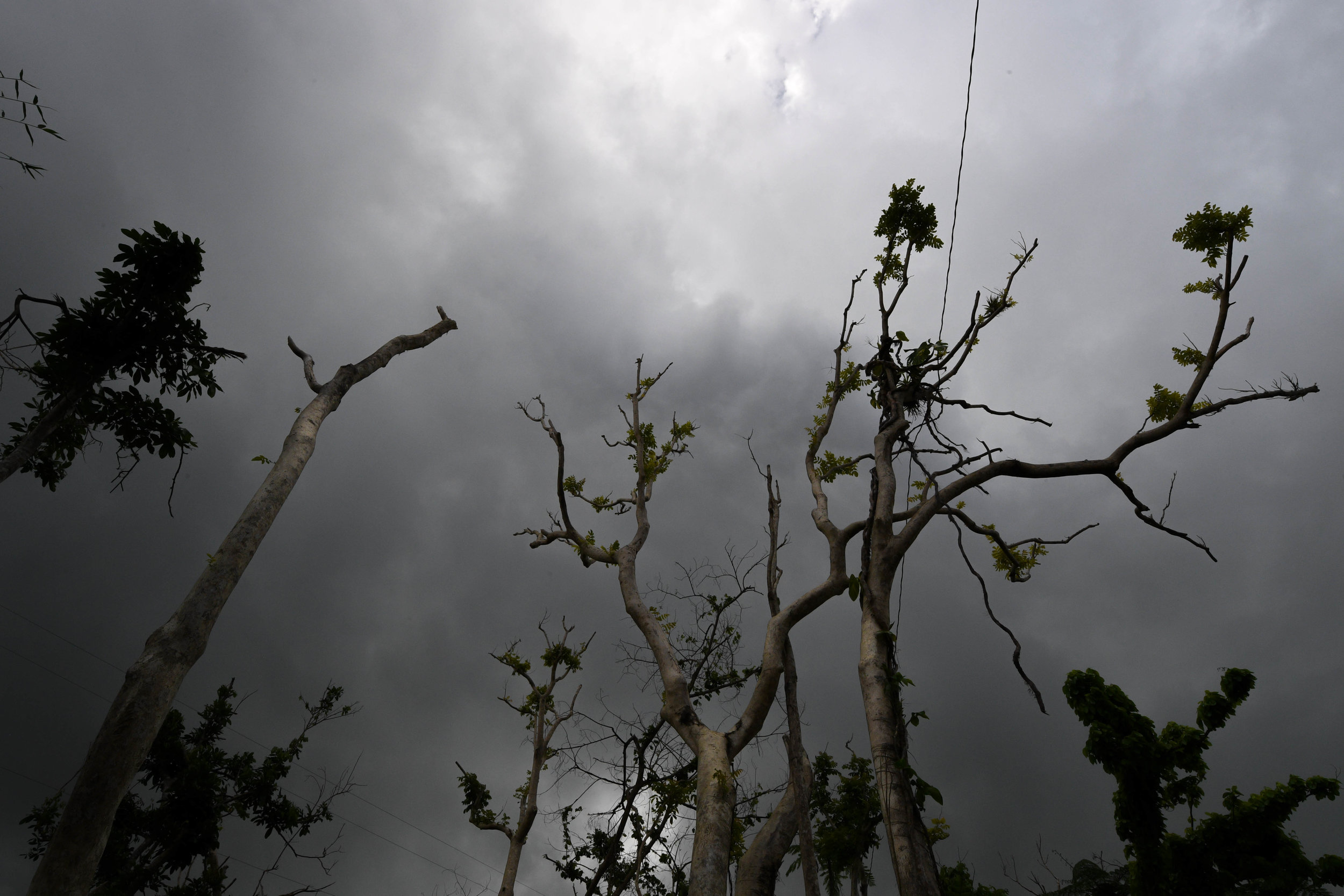 Trees in the mountains of Puerto Rico are left bent and stripped after winds of 185 mph from Hurricane Maria hit the island.