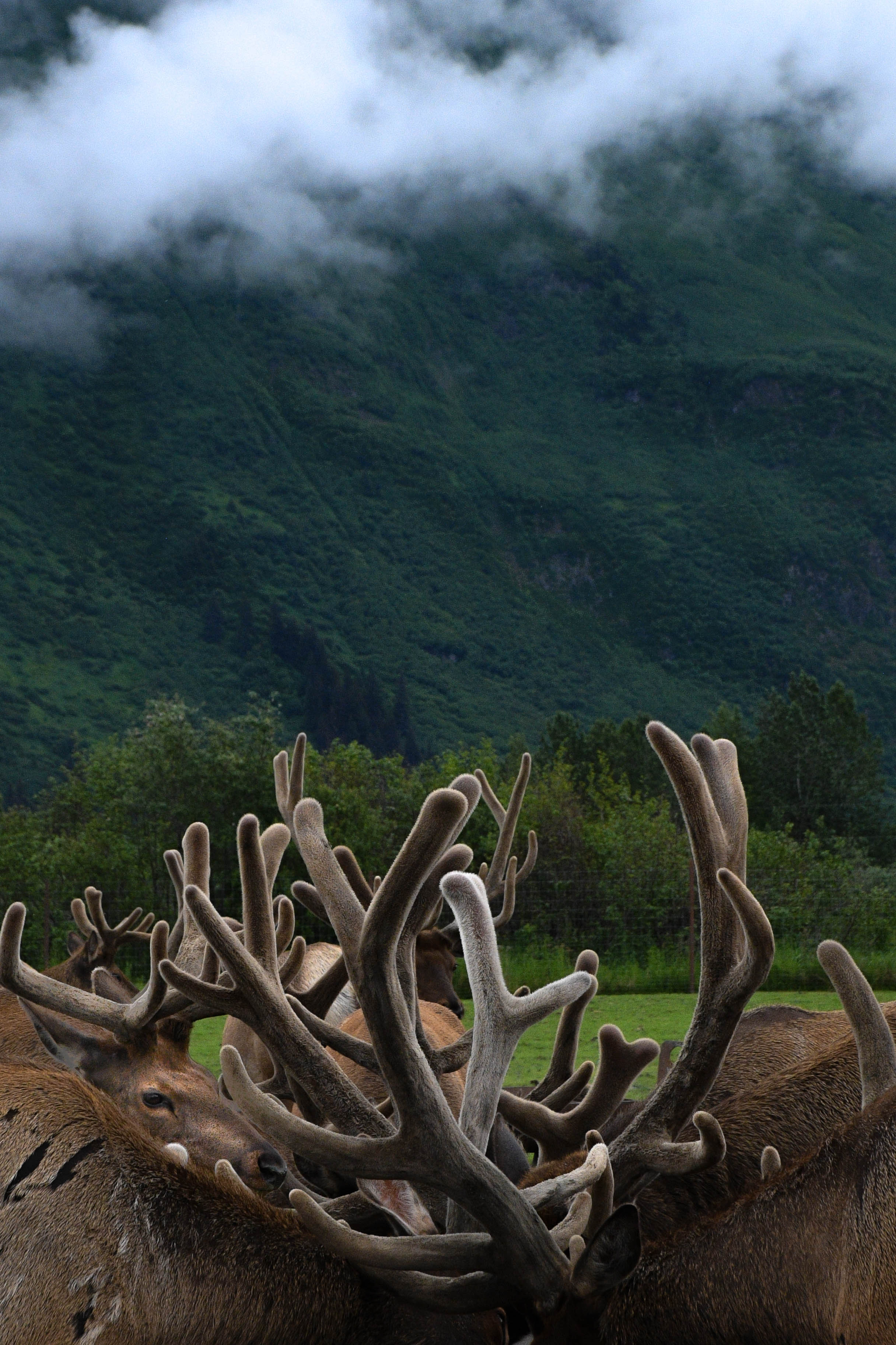 Alaska_005.jpg