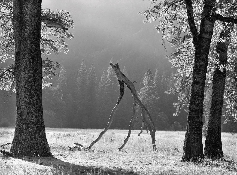 Walking Limb