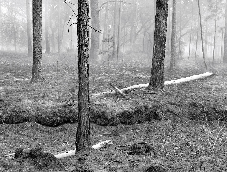 Burned Forrest