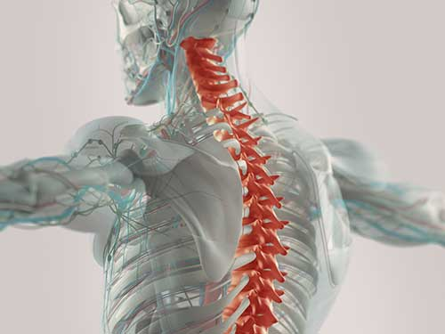 spinal injury attorney.jpg