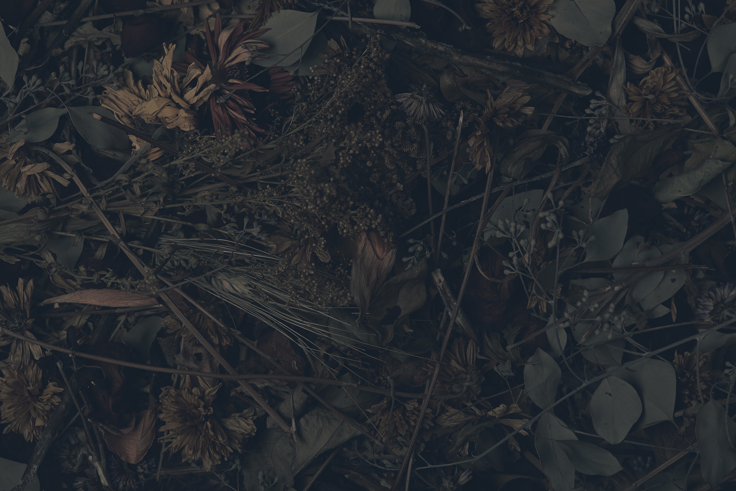 deadflowers2582_3k.jpg