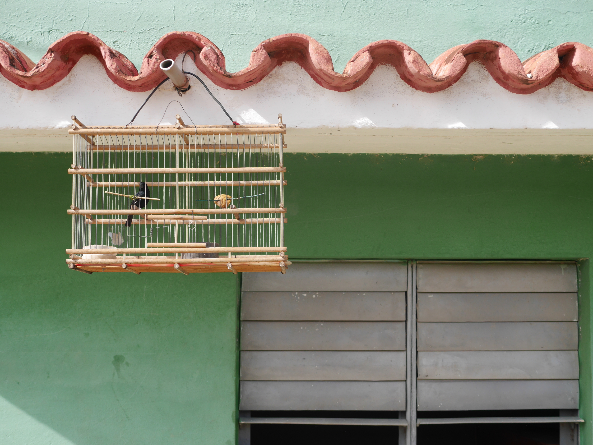 Blackbirds hang on many Cuban's homes. We were told there is some sort of contest associated with this.
