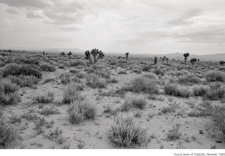 11_Yucca west of Caliente.jpg