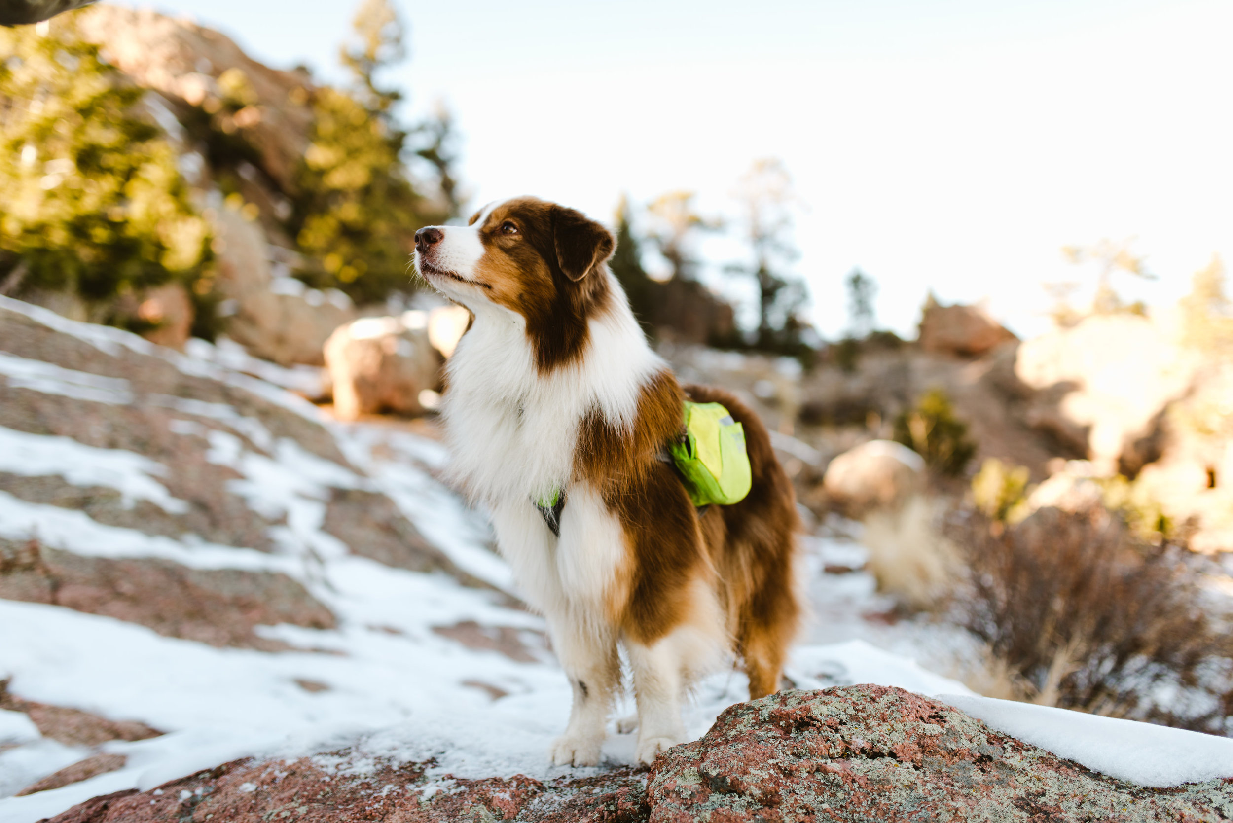 When on an adventure, our dogs easily leave the rest of the world behind and focus on the moment.  We do well to follow their lead and forget about our to-do lists, invasive technology, and other human issues that distract us from the experience.