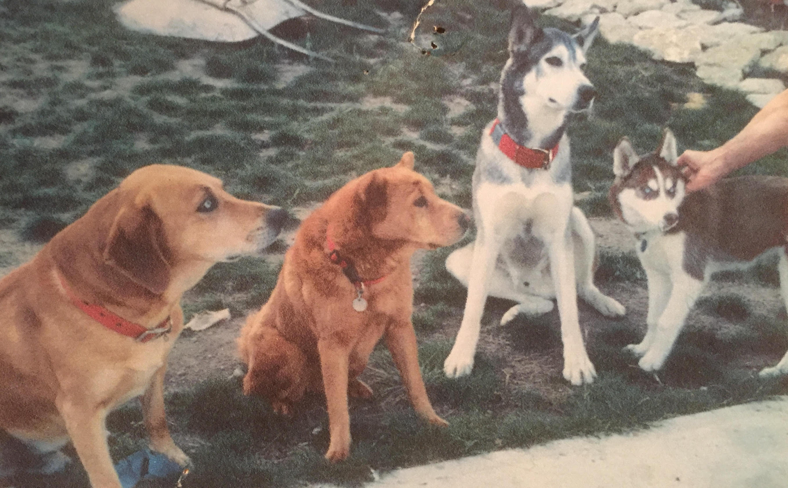 Left to Right: Chance, Honey, Raydar & Annie