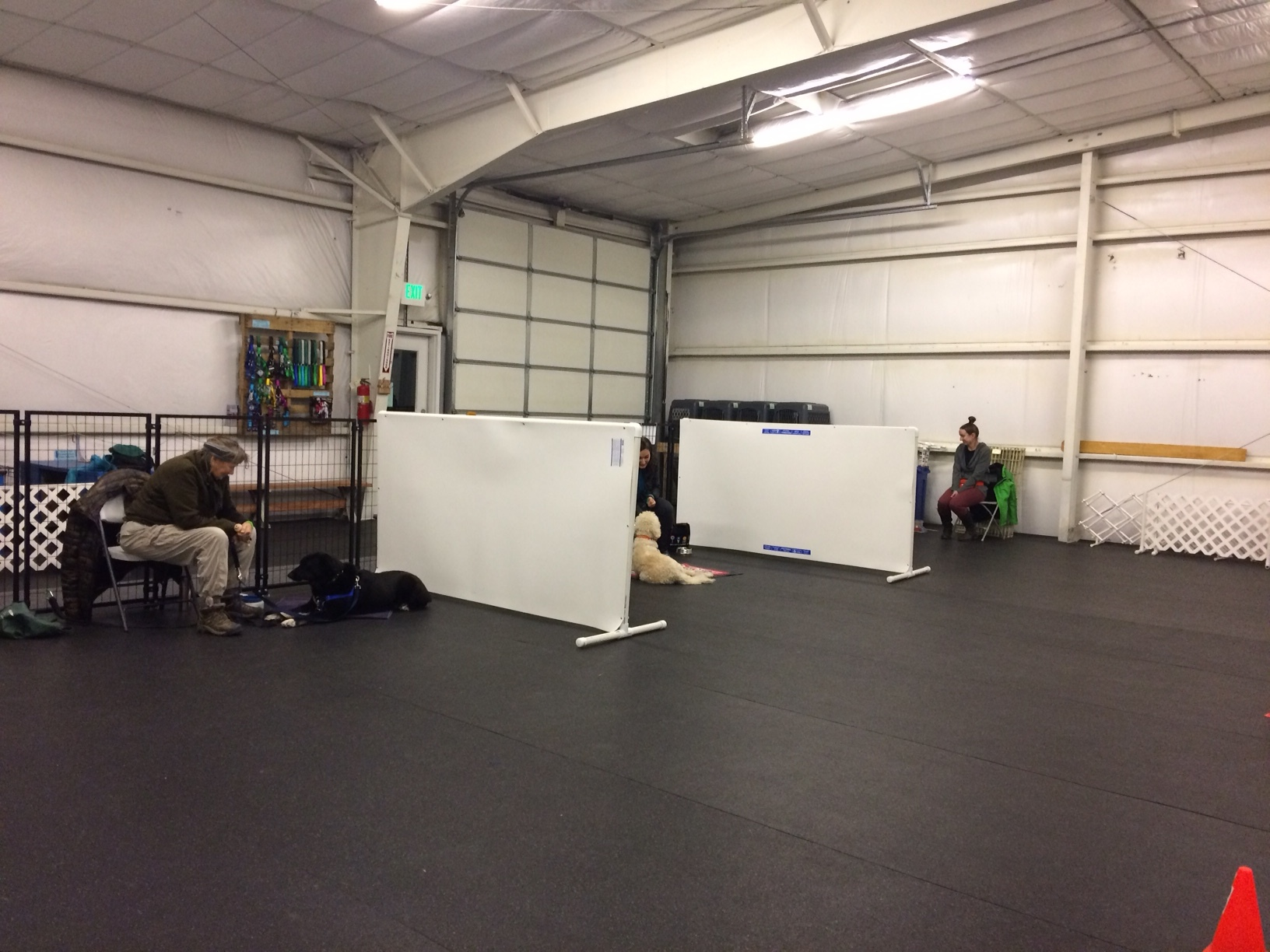 The class environment is set up for a maximum of 6 dogs, and each dog has their own area divided by visual barriers to set them up for success.