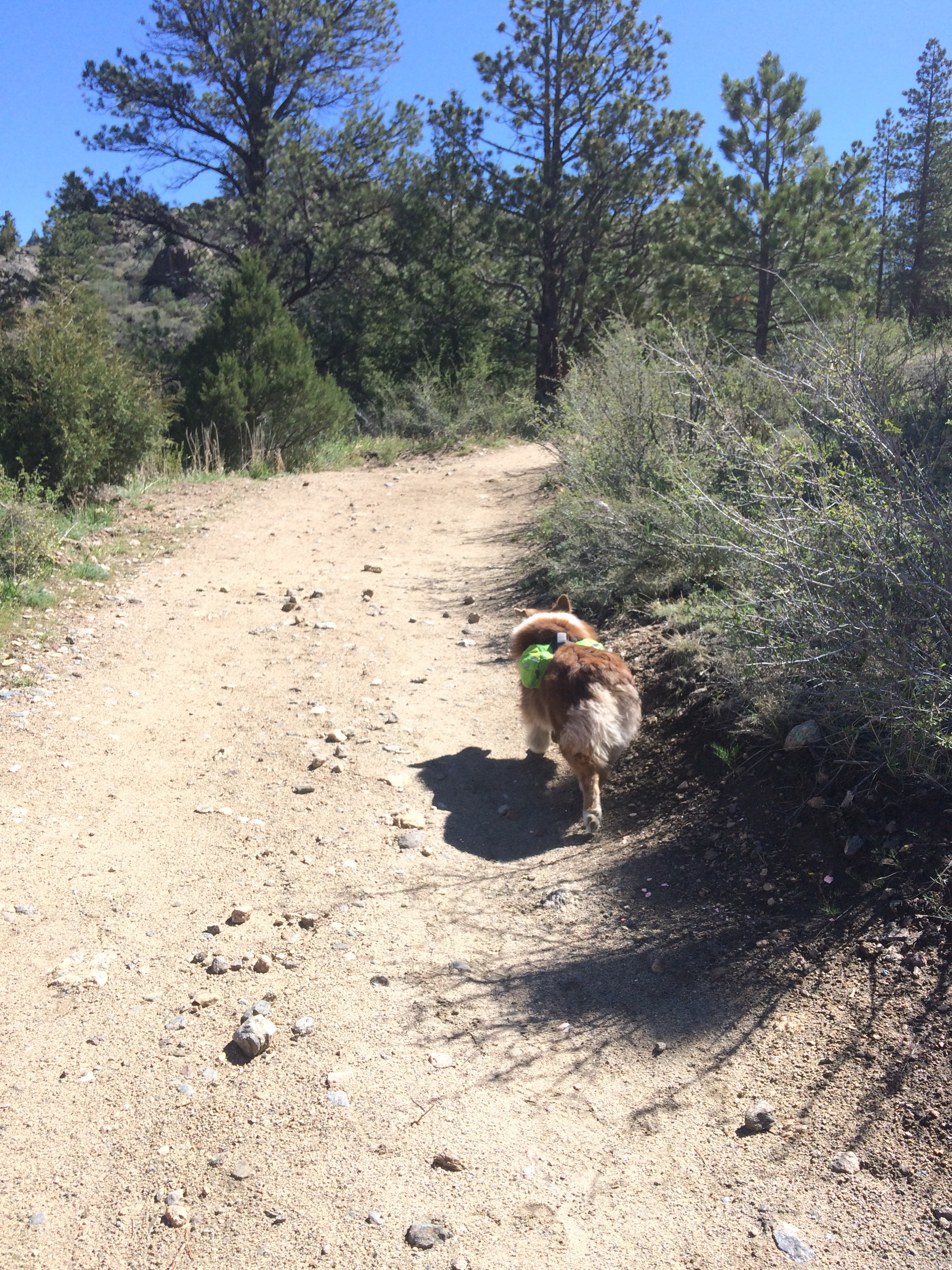 Roo is always up for a good adventure!