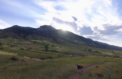 dog-hiking-adventure-dog-training-colorado