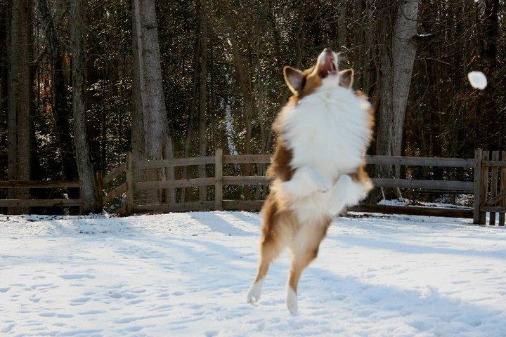 roo-snow-winter-adventure-tips