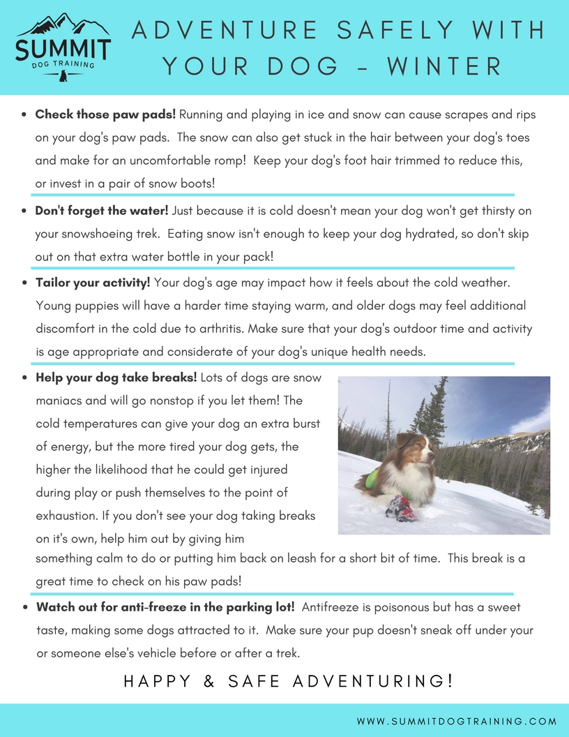 winter-adventure-safety-tips-for-dogs
