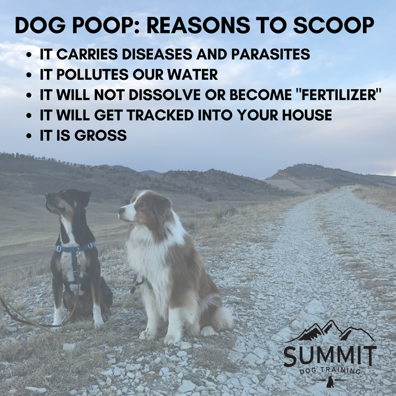 dog-poop-reasons-to-scoop