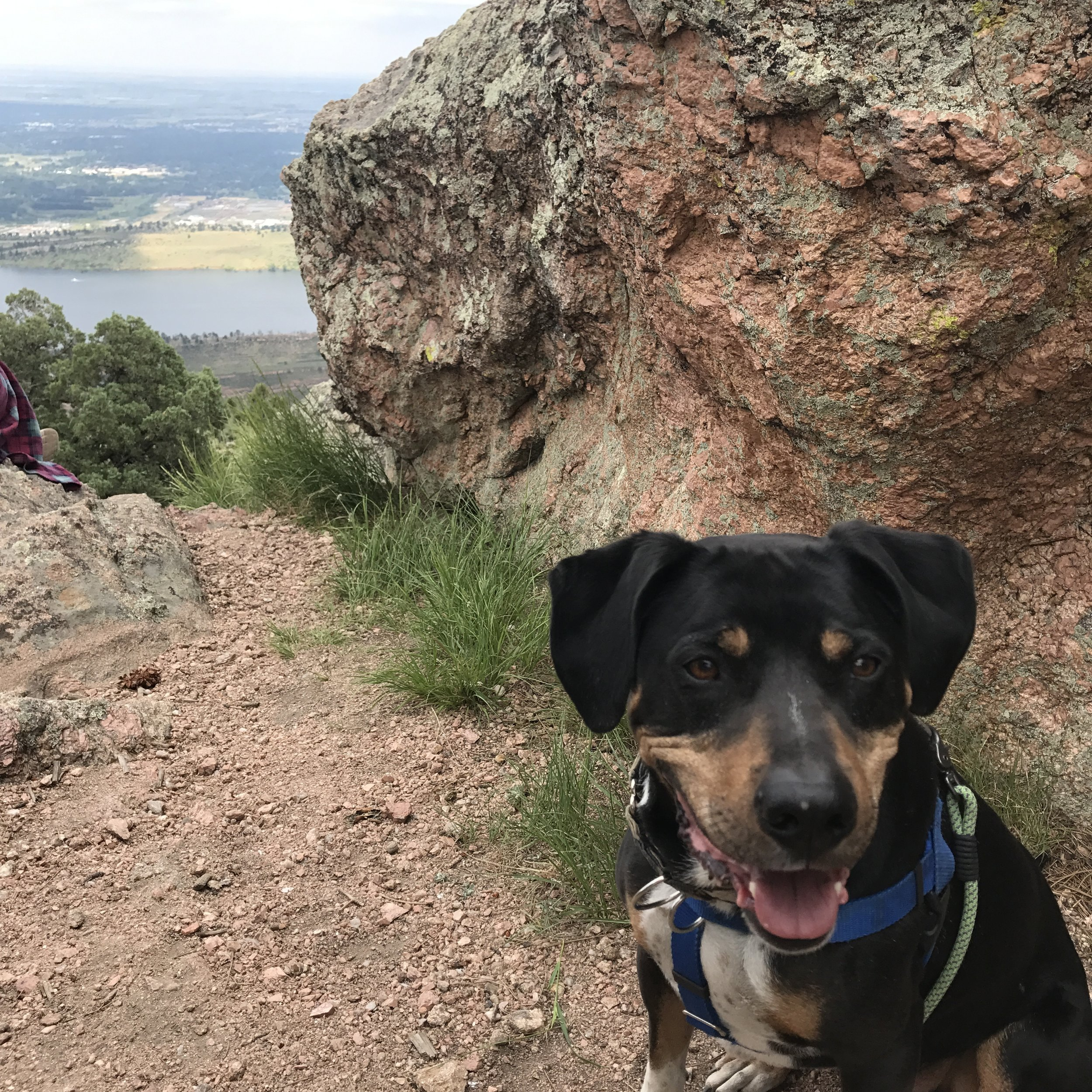 dog-training-colorado-fort-collins-hiking-with-dogs