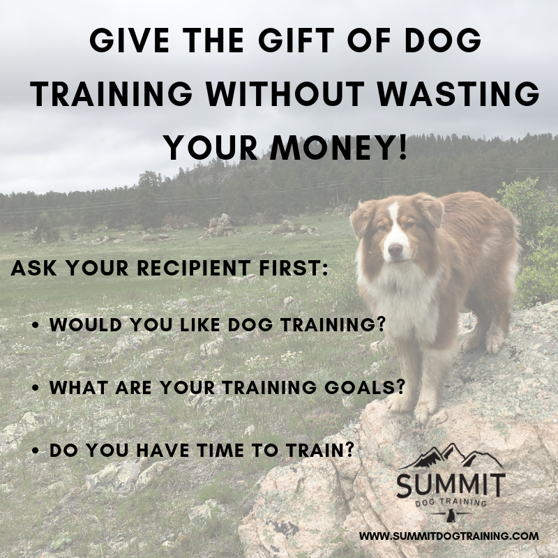 dog-training-gift-certificates-online-shopping-black-friday