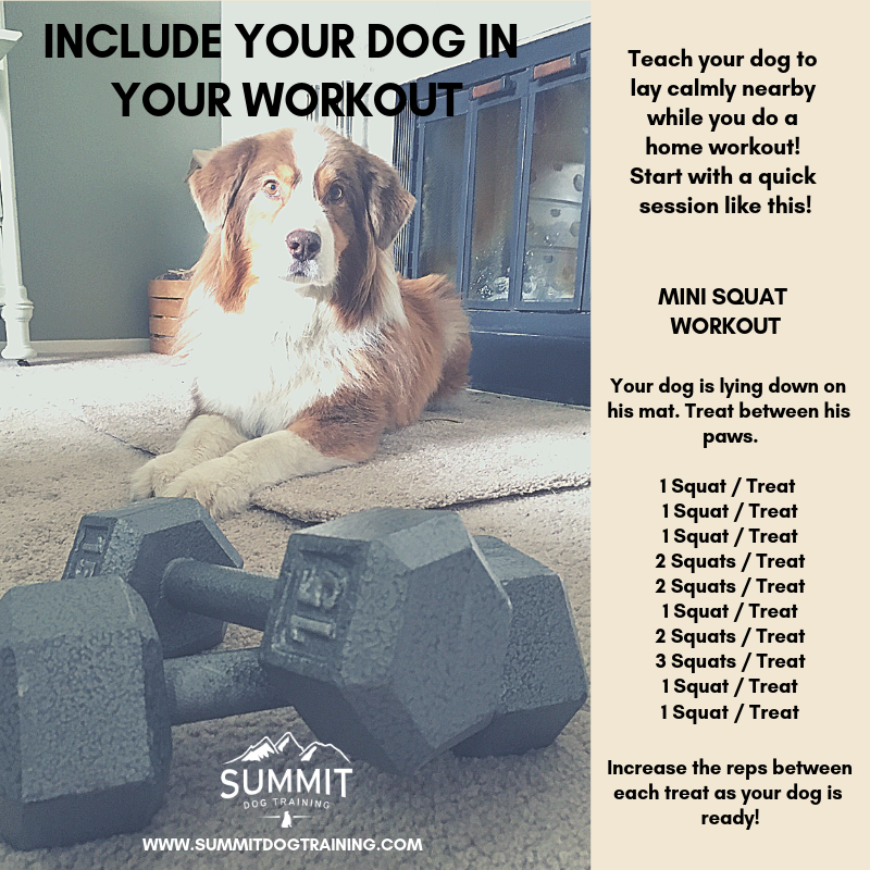 workout-with-your-dog-squats-workout-guide