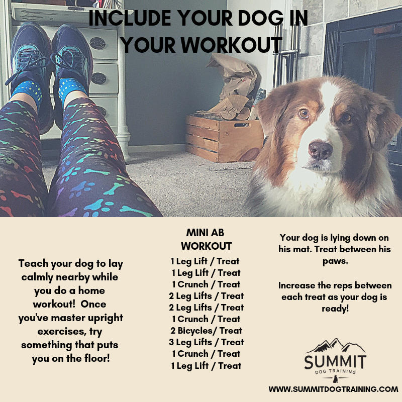 ab-workout-guide-with-dogs