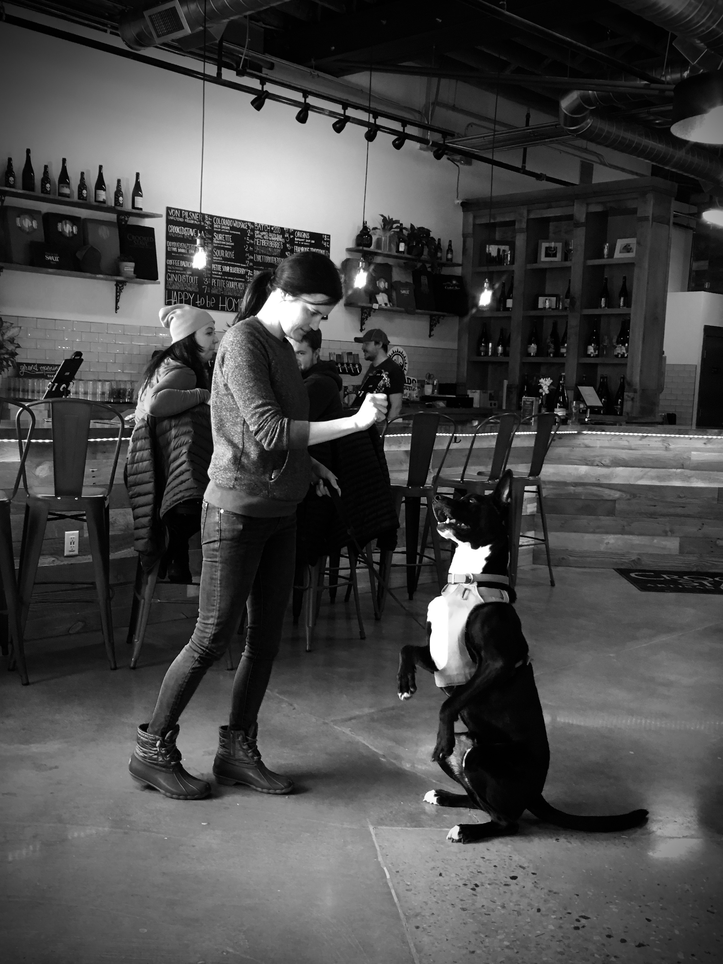 drink-with-your-dog-brewery-dog-training
