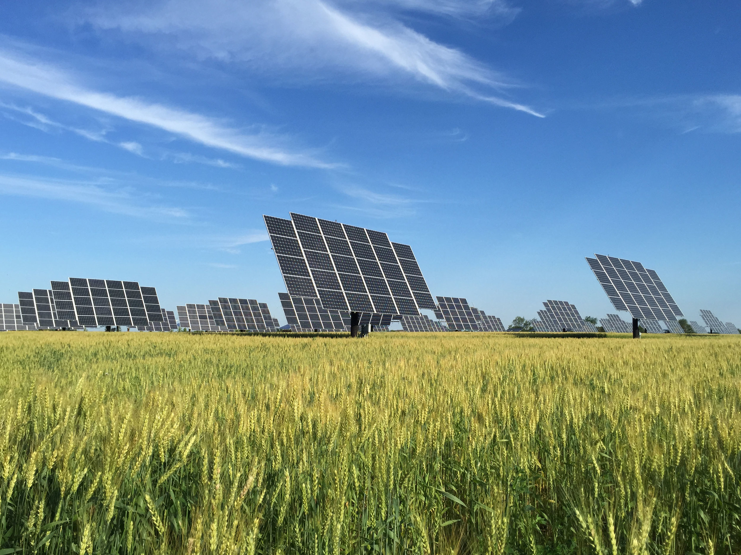 Solar Farm Winter Wheat 2 copy.jpg