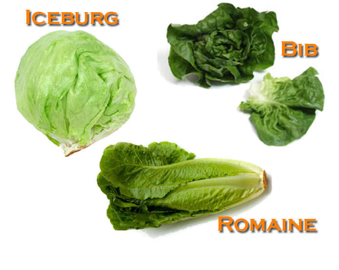 <STRONG>LETTUCE</STRONG>