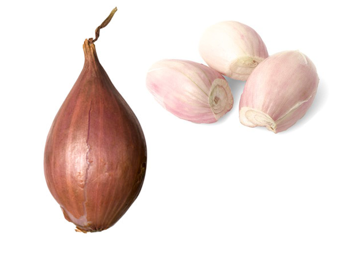 <STRONG>SHALLOT</STRONG>