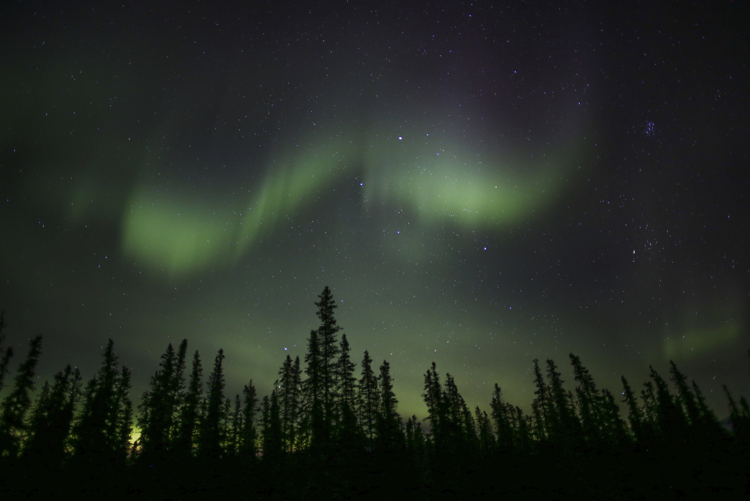 The northern lights dance above spruce trees in Denali National Park and Preserve on October, 15, 2017.