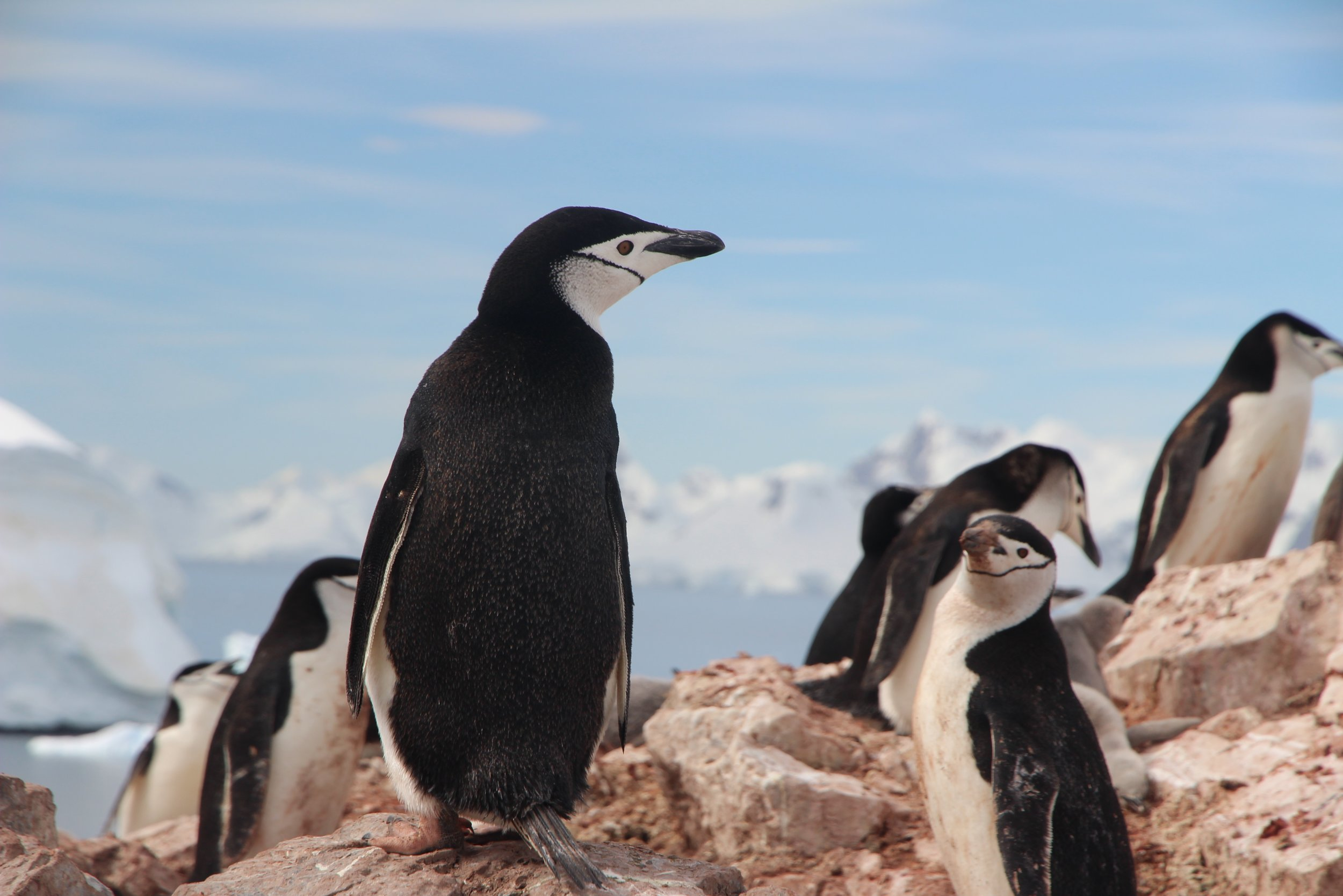 Penguins, seals, and whales are among the wildlife you're likely to encounter in Antarctica (Image: Eamonn Maguire,  Unsplash )