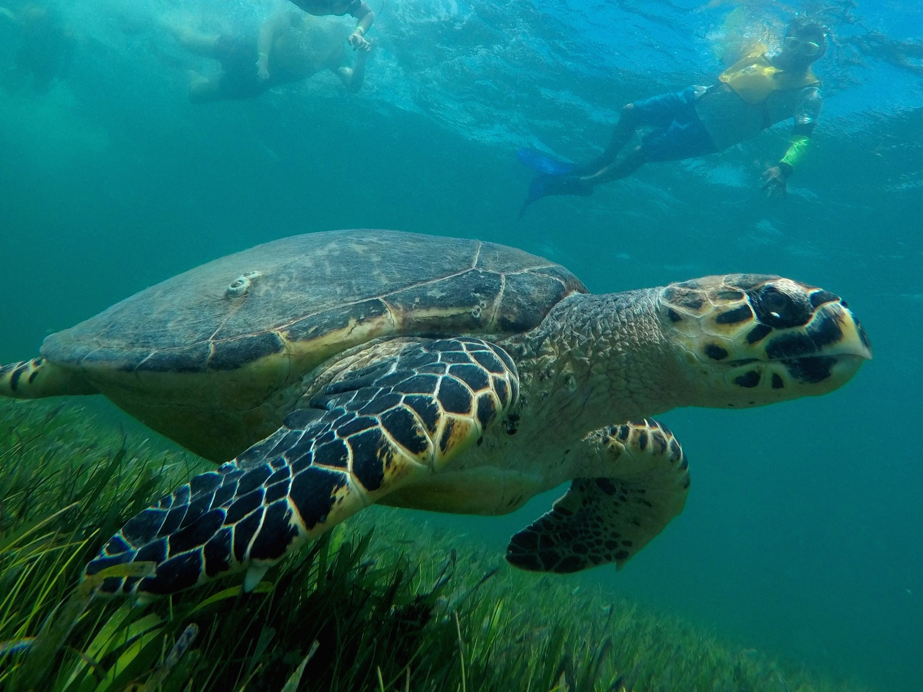 We were fortunate enough to spot a sea turtle during our tour — and a rather large one, at that. As they are endangered, there are  a number of initiatives being undertaken to preserve and protect them . For example, many resorts include sea turtle-oriented activities and education for their guests.
