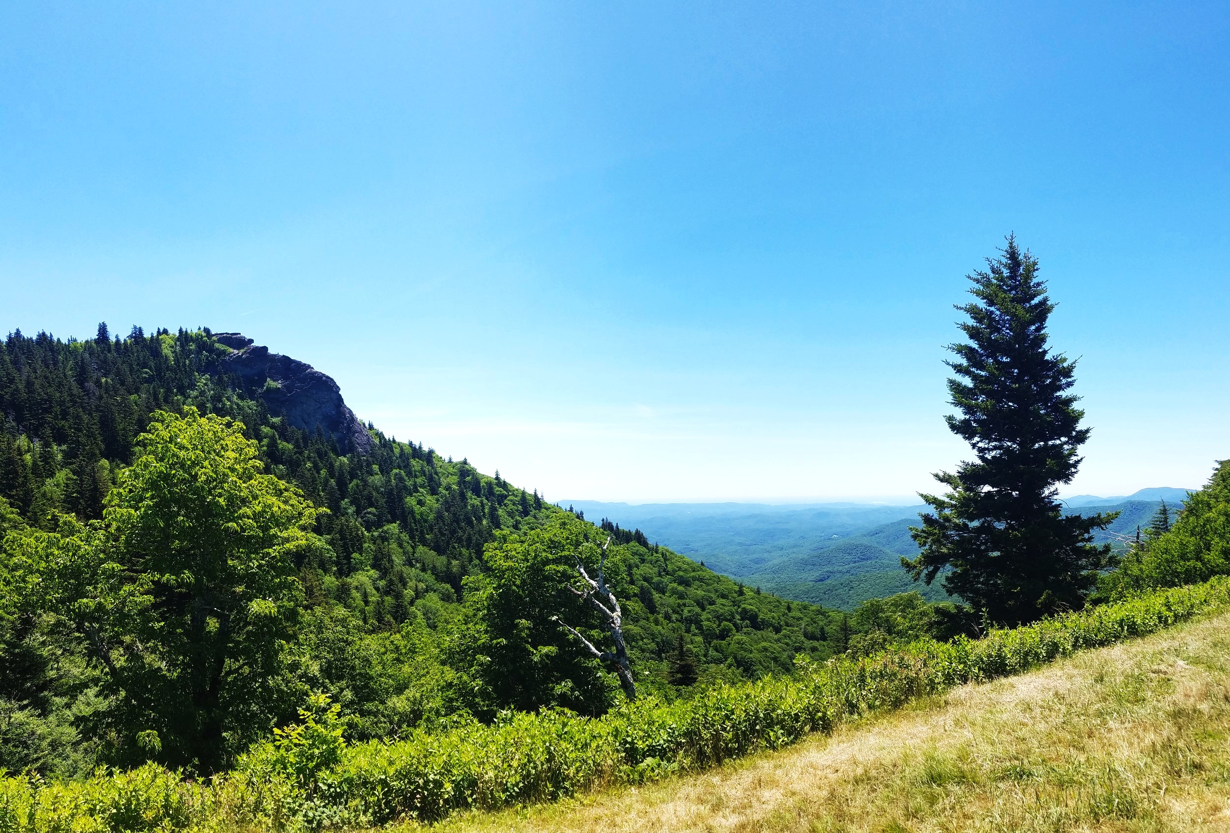 If Pisgah National Forest is good for one thing, it's views like this