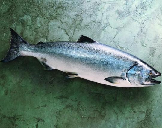 Salmon-Whole-Fish-King-572-640x480.jpg