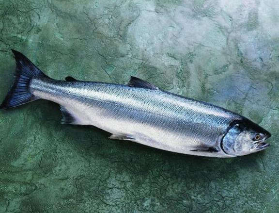 Salmon-Whole-Fish-Coho-573-640x480.jpg
