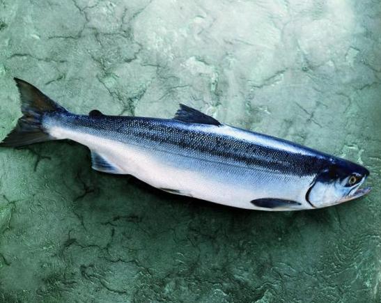Salmon-Whole-Fish-Sockeye-576-640x480.jpg