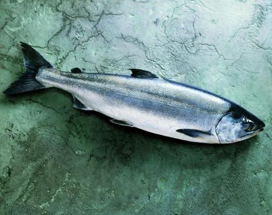 Salmon-Whole-Fish-Keta-575-640x480.jpg