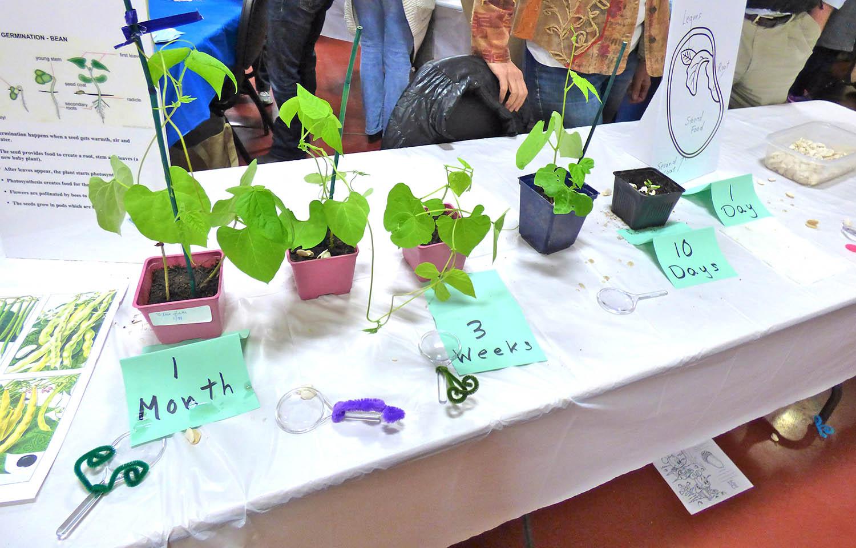Nicasio_School_fundraiser_plants.jpg
