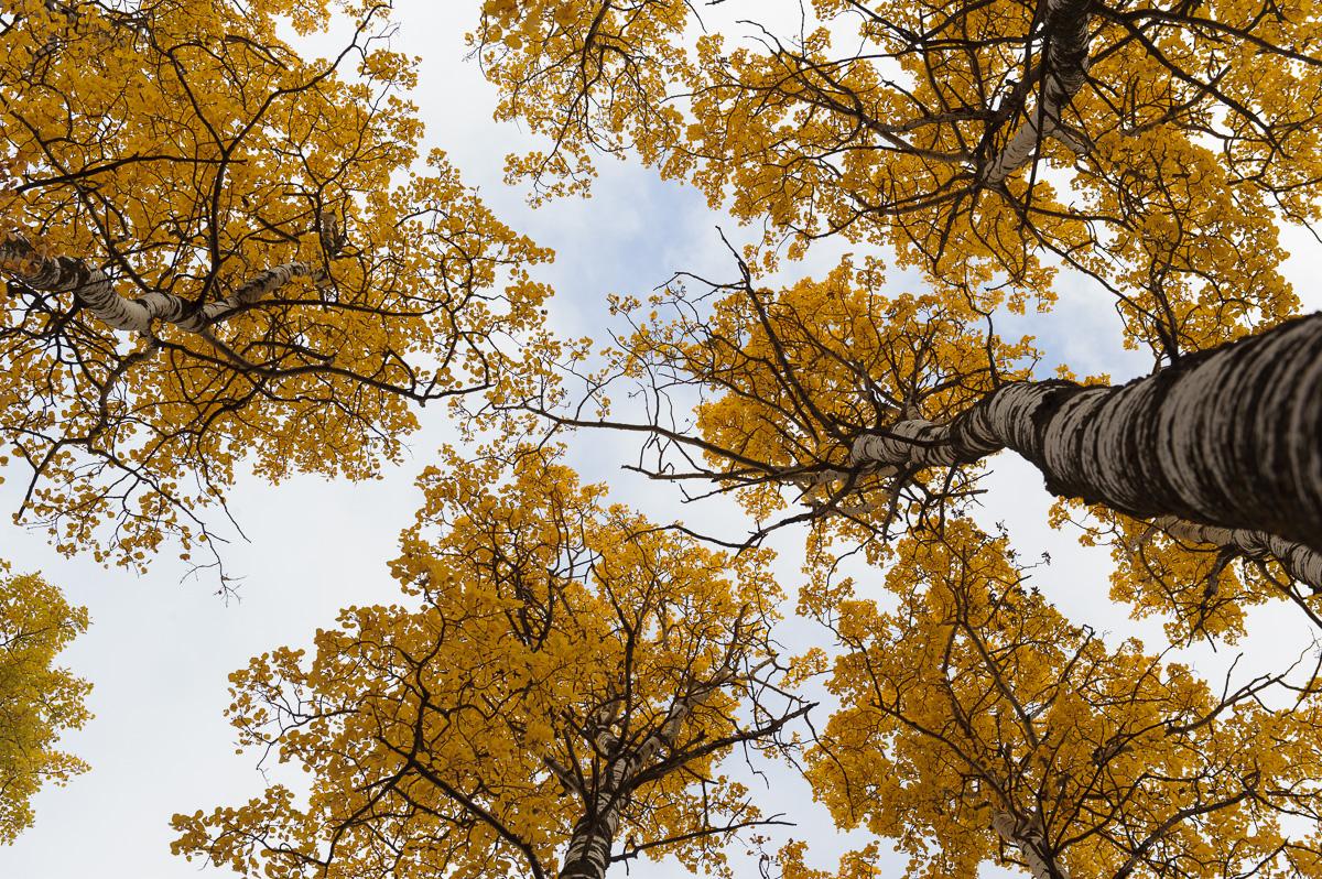 Images Alberta Field Trips-81.jpg