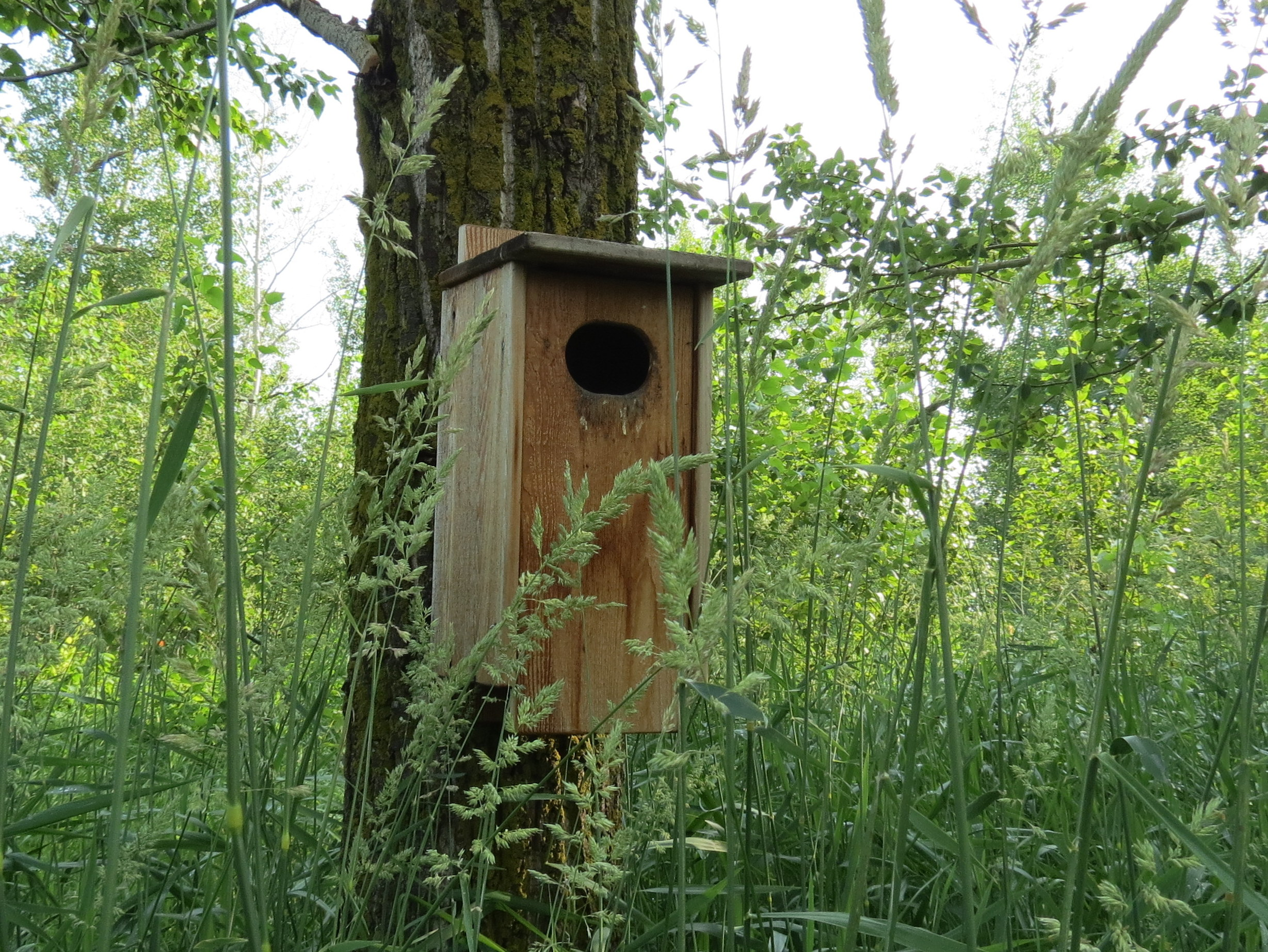 Duck nest box at Golden Ranches