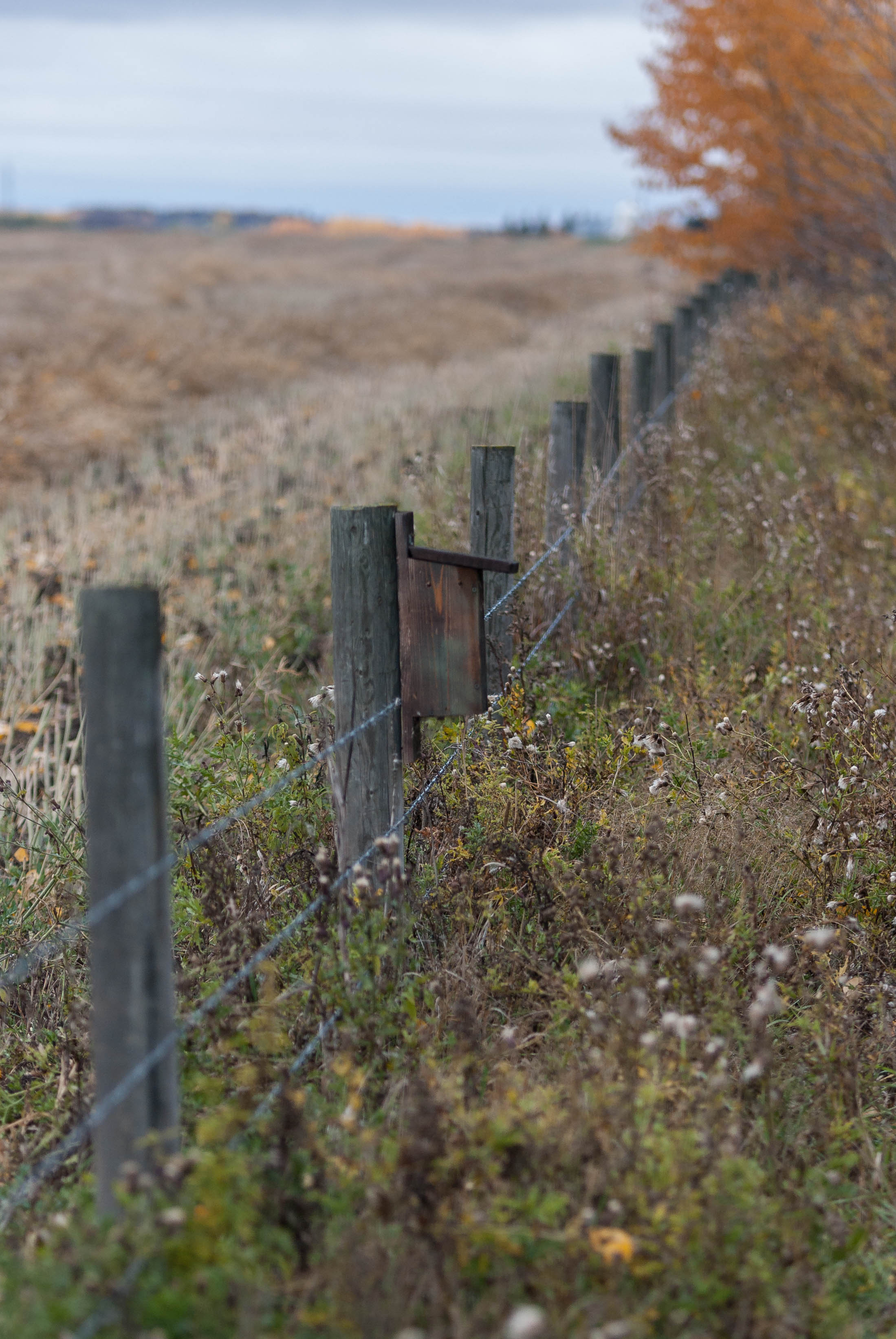 Fence and bird houses by Steve Ricketts